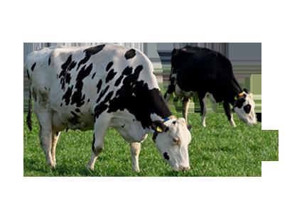 Landbrugsdyr